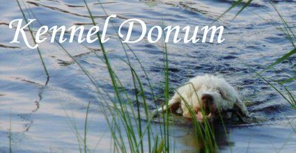 Kennel Donum